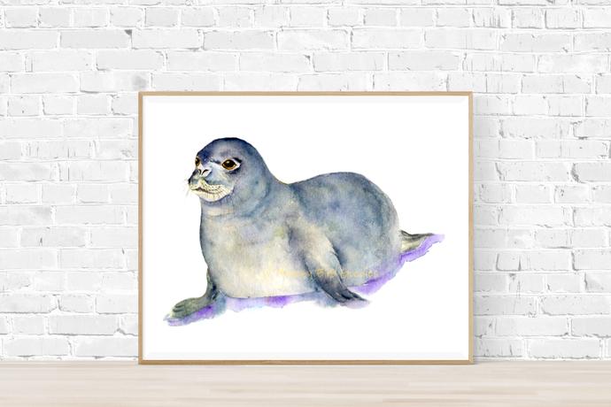 Baby Seal Print