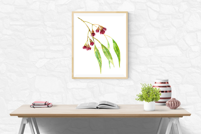 Flowering Gum Print, Albany Red Gum Print, Corymbia Ficifolia, Watercolor