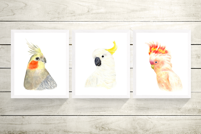Australian Parrot Set of 3 Prints