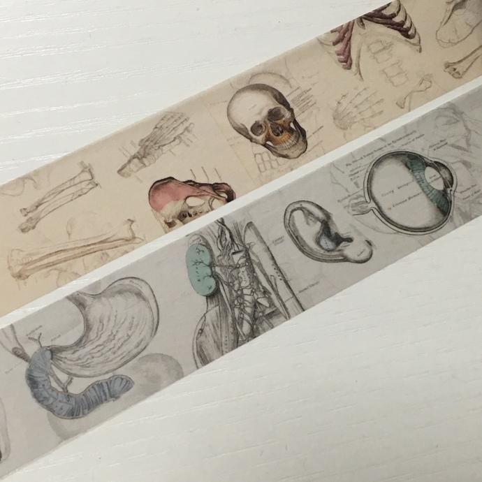 2 Rolls of Limited Edition Washi Tape: Human Body, Skull, Gray's Anatomy