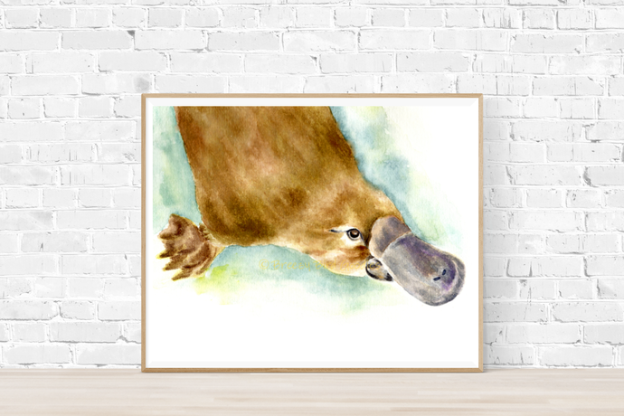 Platypus Print, Watercolor Platypus, Australian Platypus, Art for Home,