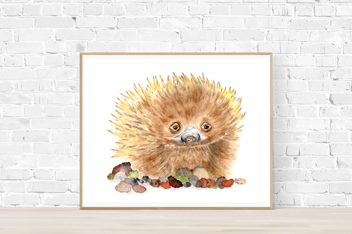 Echidna The Explorer Print