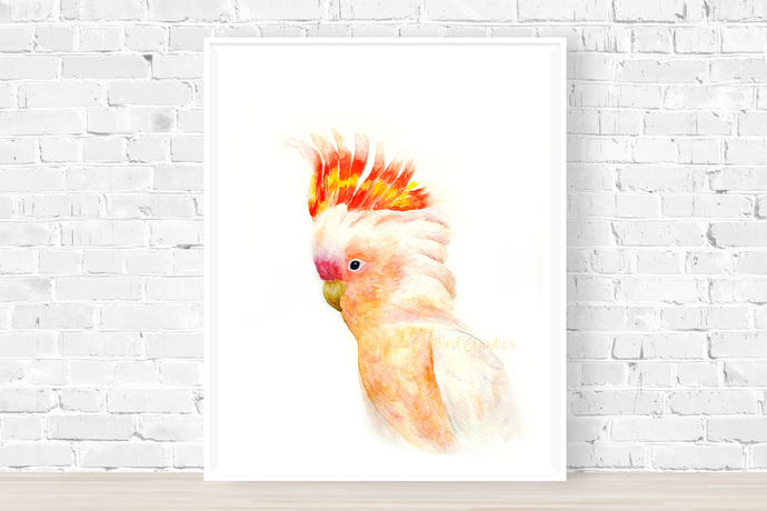 The Major Mitchell's Cockatoo Print