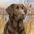 ChocoLate Lab Cross Stitch Pattern***LOOK***X***INSTANT DOWNLOAD***