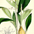 Amazon Lily 1793 Antique William Curtis Regency Botanical Engraving, Pl 6259