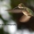 Original Photography 5x7 print Minnesota photography Hummingbird photography