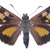 "Brown Spotted Butterfly Decal - 6"" wingspan"