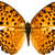 "Light Orange Butterfly Decal - 6"" wingspan"