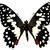 "Lime Butterfly Decal - 6"" wingspan"