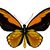 "Orange Birdwing Butterfly Decal - 6"" wingspan"