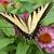 nature photography prints, small desk art, Minnesota art print 8x10, gift for