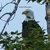 8x10 print, original photography, Bald Eagle print, eagle print, nature print,