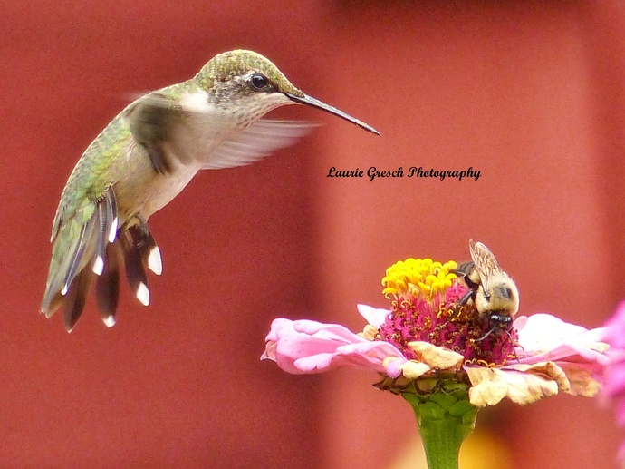 nature photography prints, small desk art, Minnesota art print, 8x10 print, gift