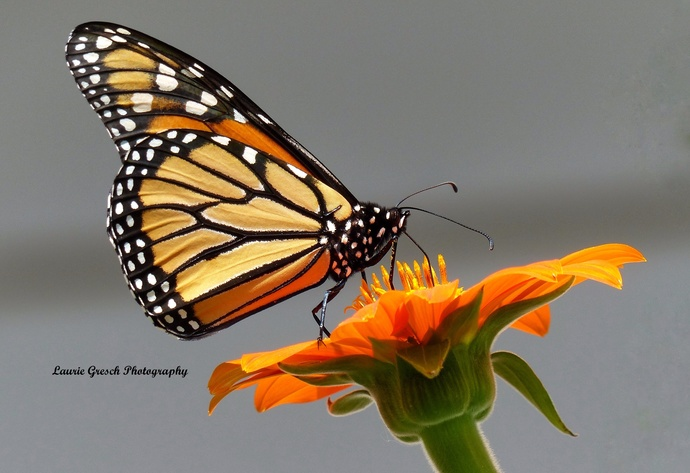nature photography prints, small desk art, Minnesota art print, 8x10 print, gift
