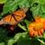 nature photography prints, small desk art, Minnesota art print, 5x7 print, gift