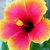 Hibiscus Flower Cross Stitch Pattern - Instant Digital Downloadable Pattern