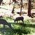 "Wildlife Print, 8.5x11, ""Cades Cove Deer"", Giclée Deer Photo Print, Animal"