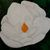 "Original Oil Painting, Floral Oil Painting, ""Magnolia on Black"" Painting,12""x16"""