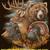 Wildlife Collage Cross Stitch Pattern***LOOK***  ***INSTANT DOWNLOAD***