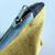 Golden Yellow Medium zipper purse for makeup, pencils, or other things - Linen