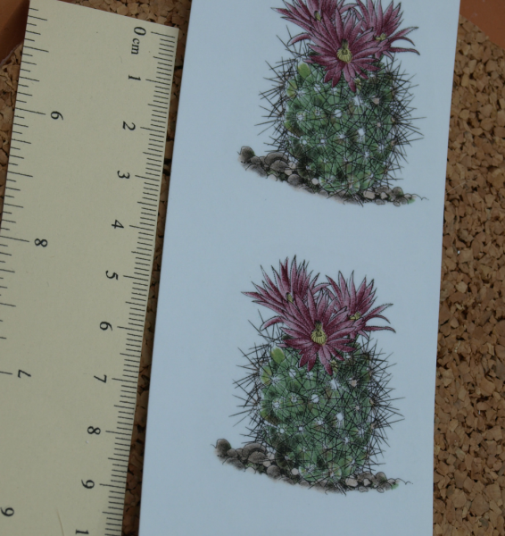 Cactus Ceramic Waterslide Decal D10-34
