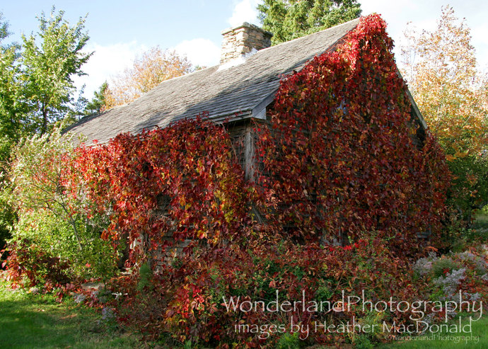 Vine Covered Farm House / Abandoned  5x7 Matted Print