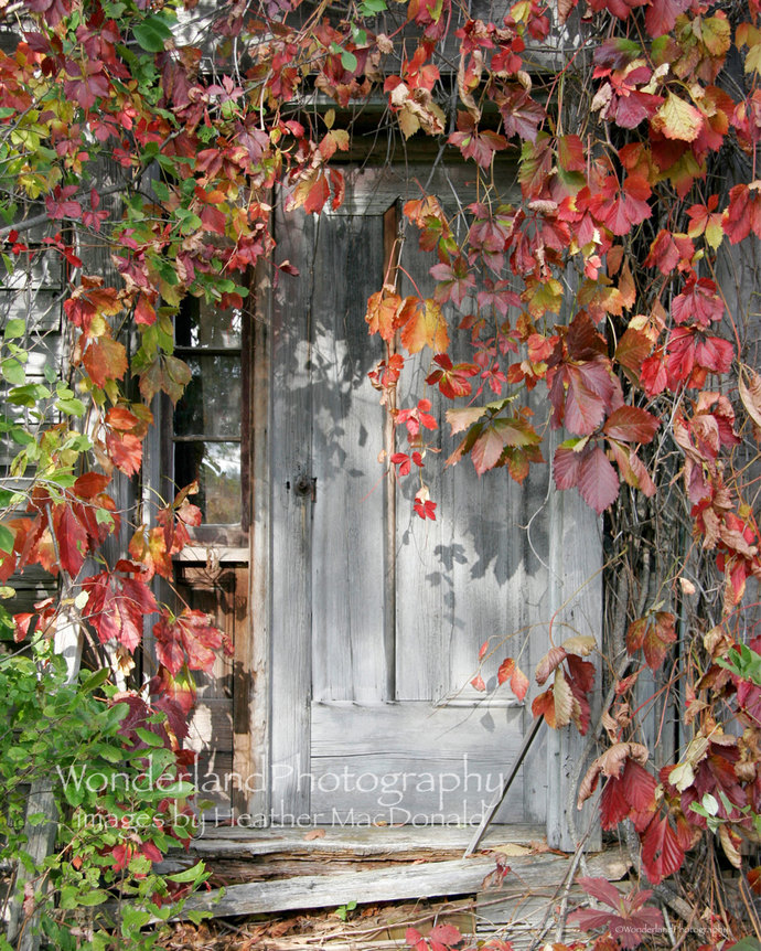 Vine Covered Door / Abandoned Farm House 5x7 Matted Print