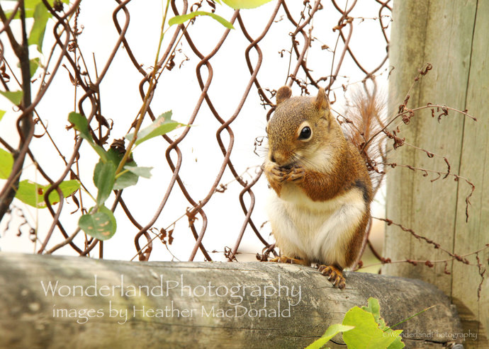 Squirrel Photograph / 5x7  Matted Print