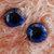 22mm German Glass Eyes,teddy bear,Blue and Gold,glass eyes, teddy bear eyes,