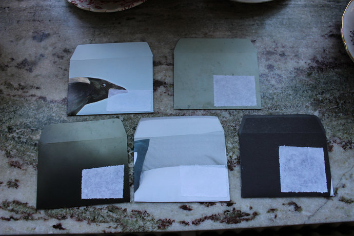 Note cards with handmade envelopes - Crow  & grey colours Pack of 5
