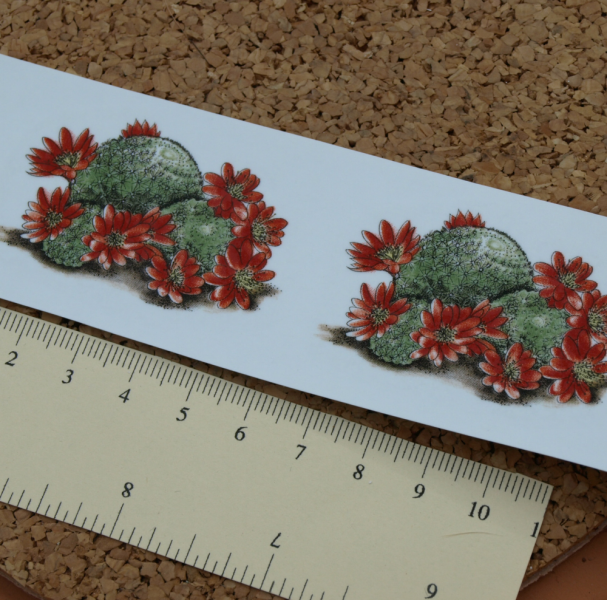 Cactus Ceramic Waterslide Decal D10-36