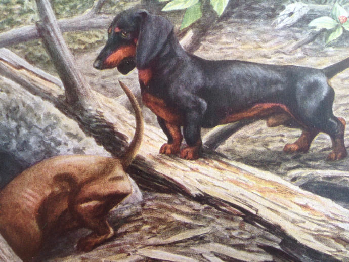 DACHSHUND sausage dogs Doxie Louis Agassiz Fuertes Vintage Mounted 1919 plate