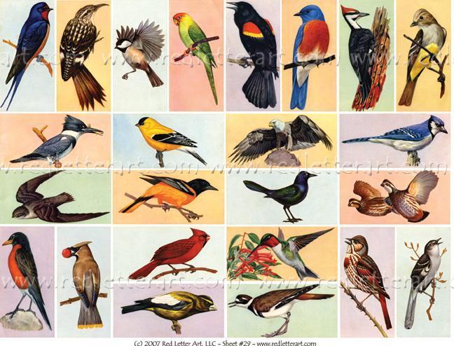 American Birds Sheet #1