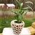 Decorative Crochet Plant Pot Cover Pattern