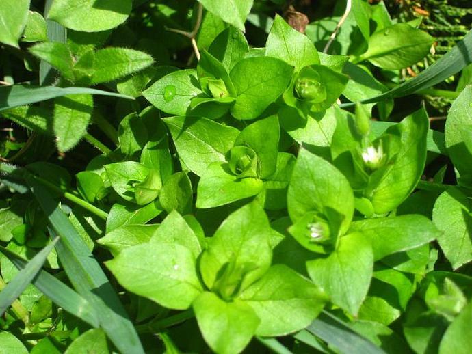 Herbal Wisdom Green Salve, Skin Irritation, Rash, Bug bites, Skin Conditions,