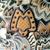 Ladies Tote, Tan Abstract Print Handbag, Shoulder Bag, Bags and Purses,Tote,