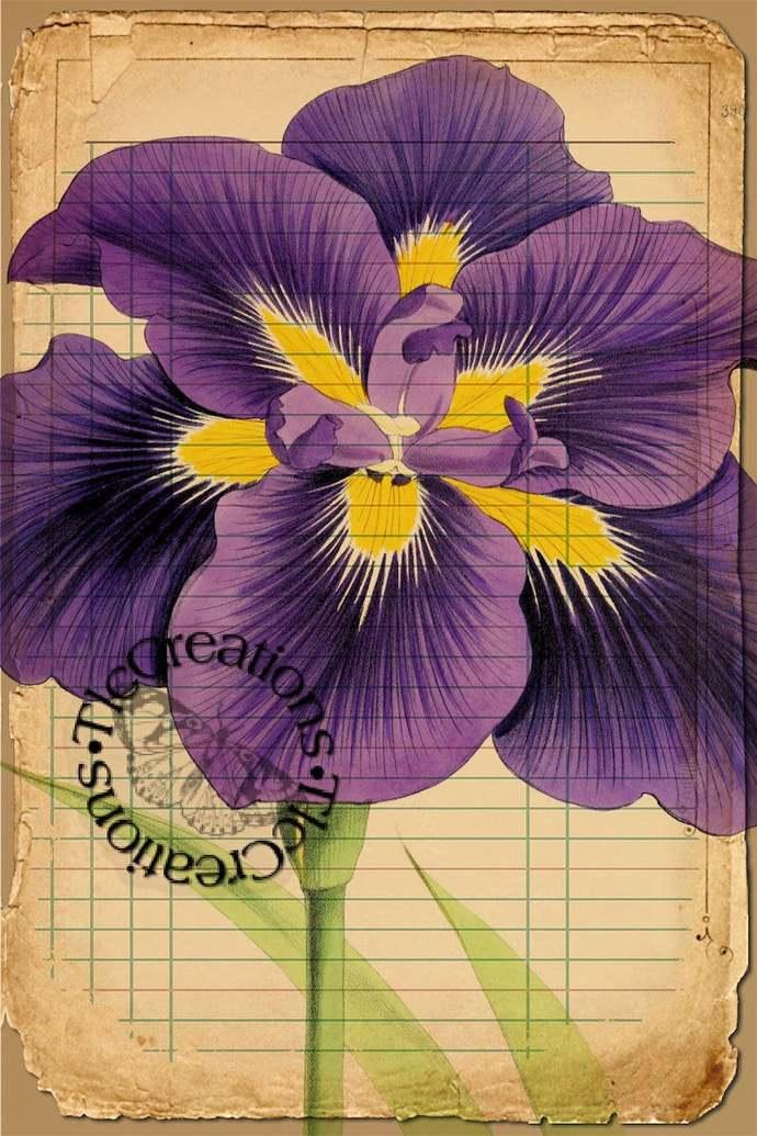 Purple Poseys Part 2 Vintage Printable Journal Cards, Ephemera Junk Journals