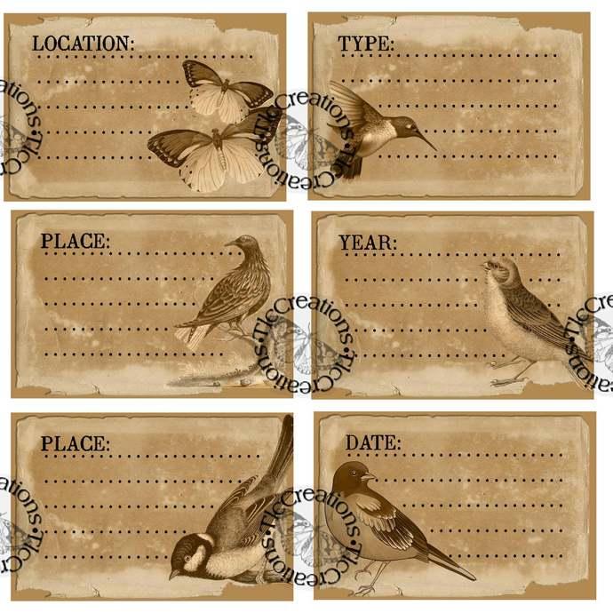 Bird Vintage Printable Specimen Cards Junk Journal Journal Cards