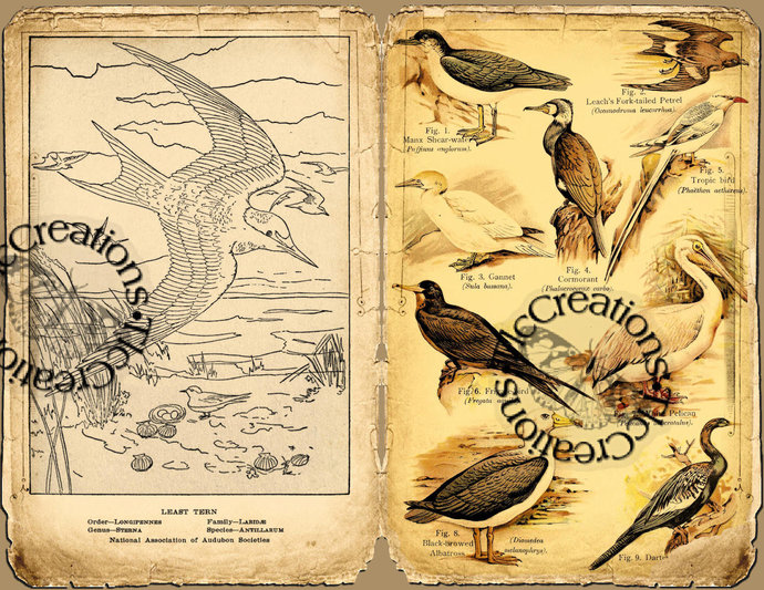 Bird Watching Vintage Printable Junk Journal Pages Full Sized