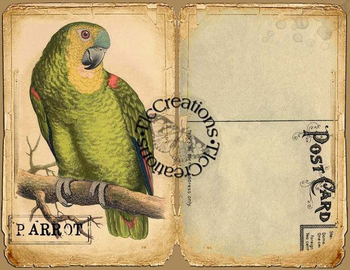 Parrot Paradise Vintage Printable Journal Papers and Journal Cards