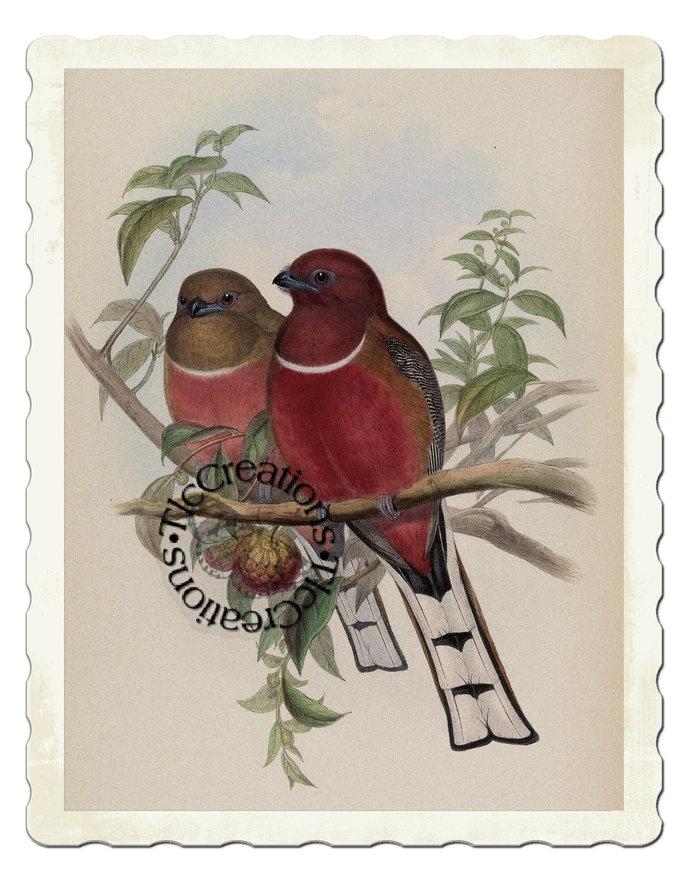 Vintage Postcards/Journal Cards Birds Series