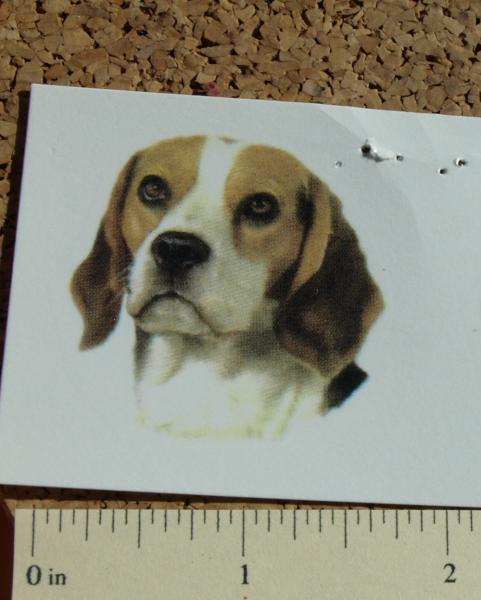 Beagle Dog Ceramic Waterslide Decals (D9-41)