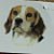 Beagle Dog Ceramic Waterslide Decals (D9-41)