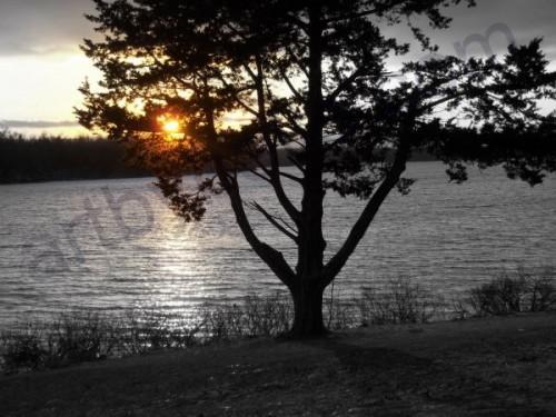 The Twilight Hour - Tree on the Lake