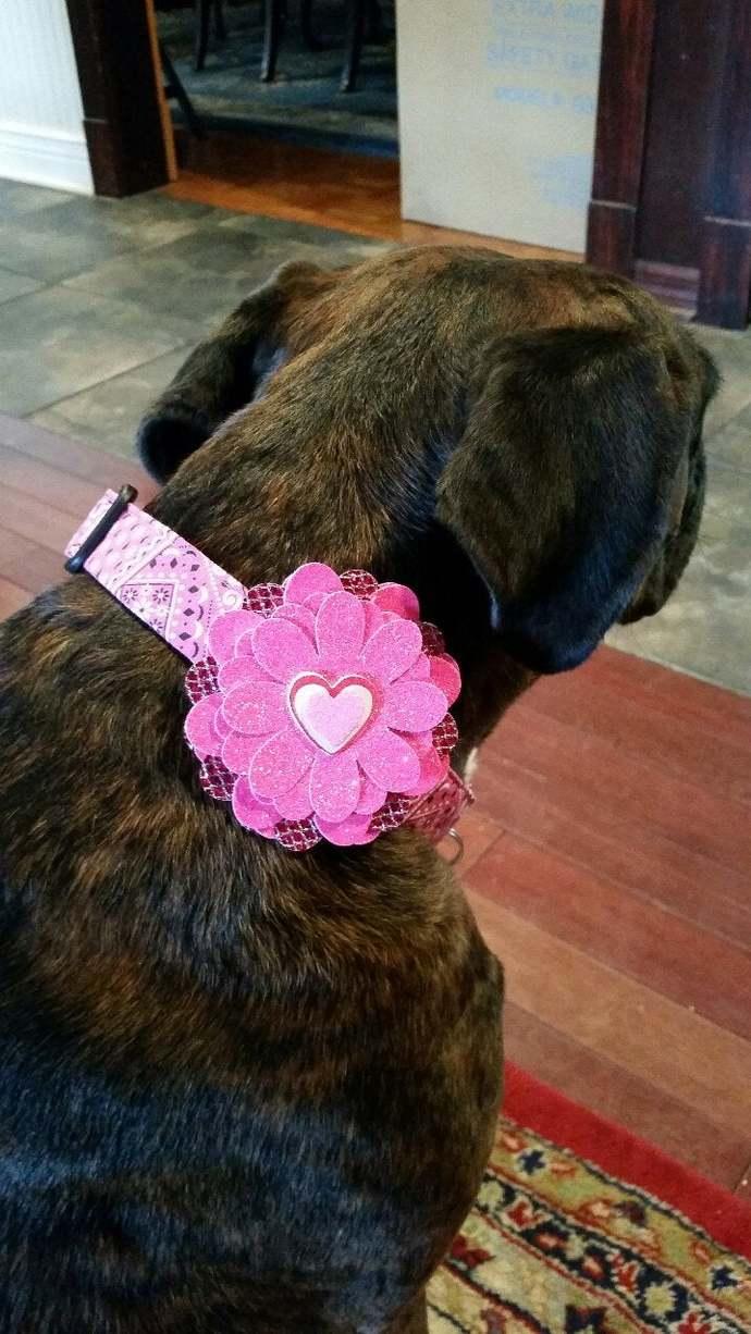 dog collar flower, dog  photo prop , pet valentine day flower heart  holiday