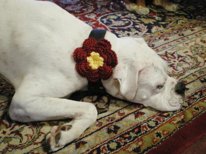 hand crochet dog collar flower -  small medium large flower - photo prop Boxer