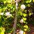 Book Page Flower Garland for Wedding Decor, Flower Garland, Literary Flower for