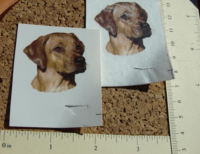 Rhodesian Dog Ceramic Waterslide Decals