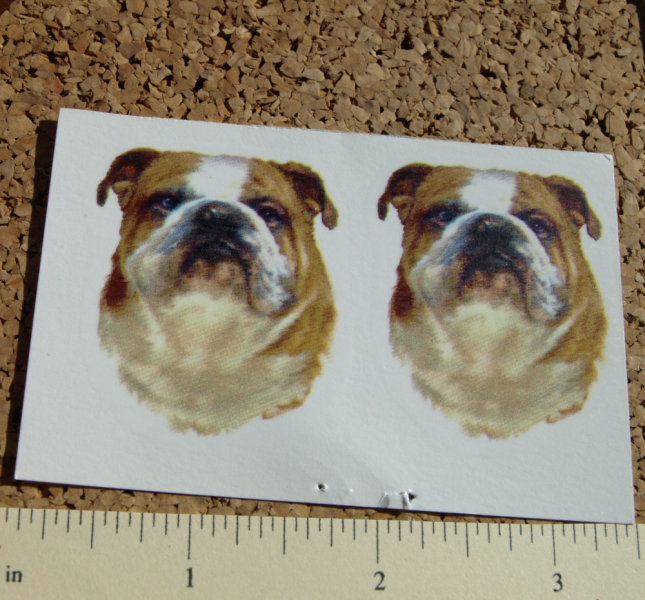 Bull Dog Ceramic Waterslide Decals