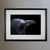 "Photo Raven Head - Art Print - 13"" x 19"" - Custom Sizes Available"